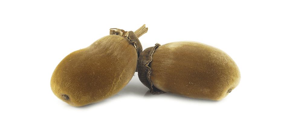 squalan - baobab