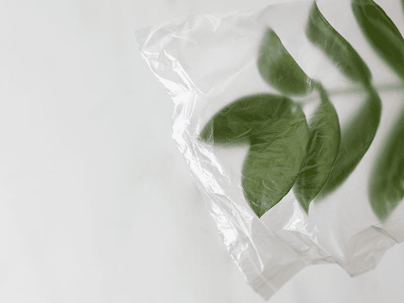 Plant in plastic